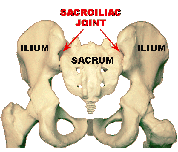 sacroiliac joint dysfunction | sport and spine rehab clinic, Human Body