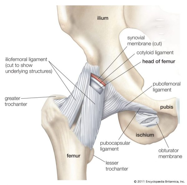 hip joint dysfunction